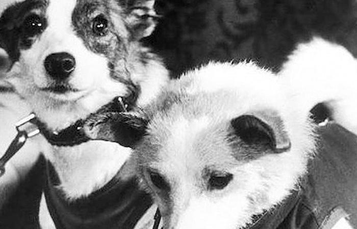 Выбор жертвы Интересно, что СССР и США выбрали совершенно разные виды животных для первых экспериментальных полетов в космос. Советы сделали ставку на собак, в то время как Америка предпочла более похожих на человека шимпанзе.