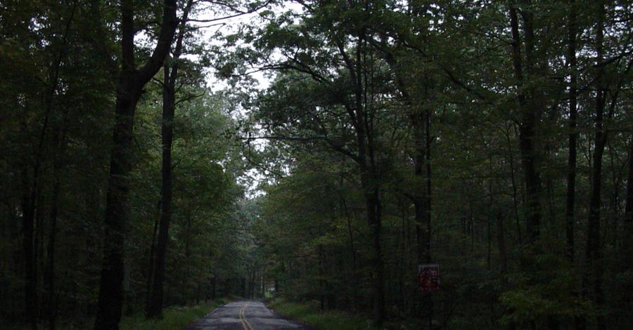 Дорога смерти США Вообще-то она зовется чуть подлиннее — Shades Of Death Road. Эта мрачная дорога расположена в Нью-Джерси, неподалеку от Нью-Йорка. Здесь каждый год происходит до нескольких десятков убийств, раскрыть которые не берется ни один из полицейских детективов. Именно поэтому в округе нет смельчаков, готовых поселиться неподалеку от этой трассы.