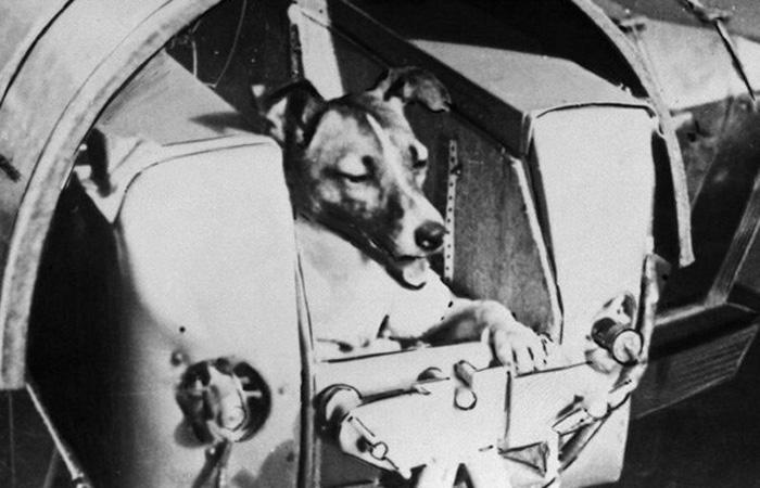 Самая лохматая, самая одинокая, самая несчастная в мире собака — The New York Times