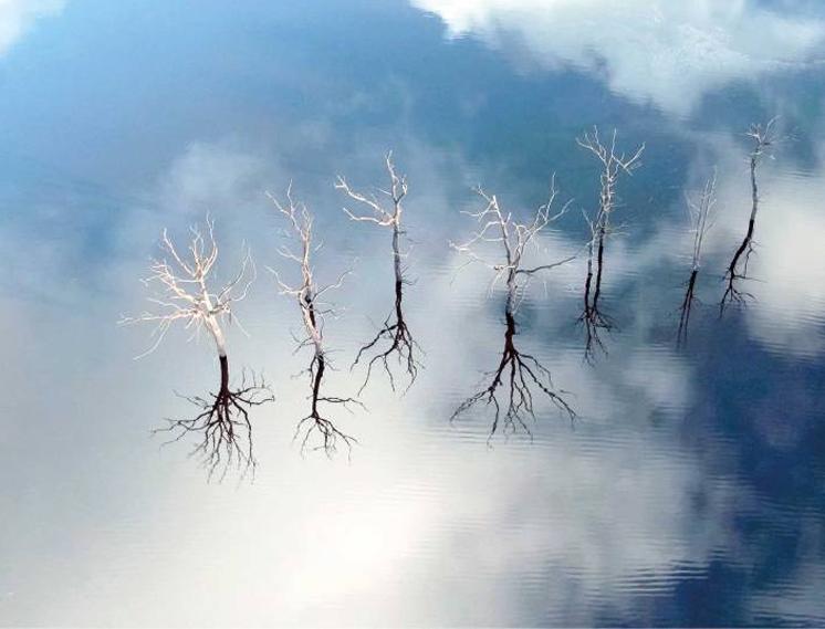 Плотина у озераСен-Жельвен была разрушена и вода отступает, обнажая затопленные ранее деревья и дома