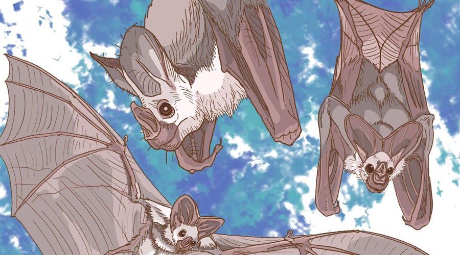 Контрольная группа В течение нескольких месяцев Йовель и его коллеги записывали звуки, издаваемые группой из 22 египетских крыланов. Они также решили сопоставить аудиоряд видеозаписям, отслеживая каждый кадр в попытках понять, какие звуки соответствуют четырем различным видам агрессии: разногласия по поводу пищи, попытки спаривания, пространство для сна и защита охотничьих угодий.