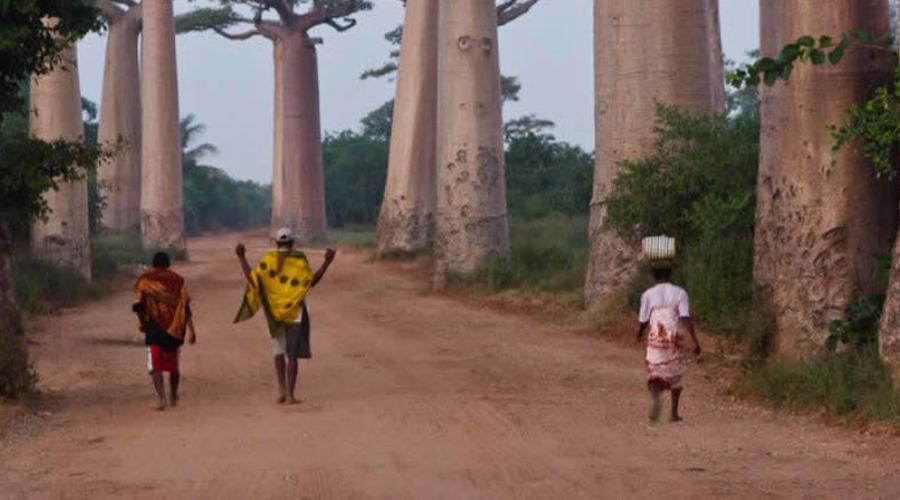 Мадагаскар С января 2009 года Мадагаскар сотрясают постоянные коррупционные конфликты в самых высоких правительственных сферах. Как следствие, страдает репутация всей страны: полиция не справляется со своими обязанностями, количество грабежей туристов и даже убийств здесь растет.