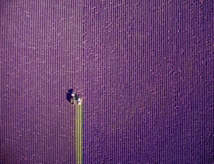Сбор урожая на виноградниках, Франция