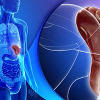 8 органов, о предназначении которых многие не знают