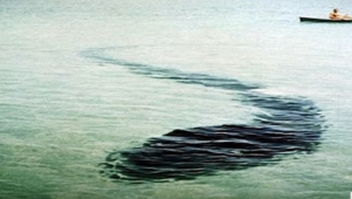 Морское чудовище В марте 1965 года побережье острова Кука было забито взбудораженными рыбаками. Один из катеров наткнулся на подводного змея, неизвестного науке и охота длилась целый месяц. К сожалению, зверь канул в бездну.