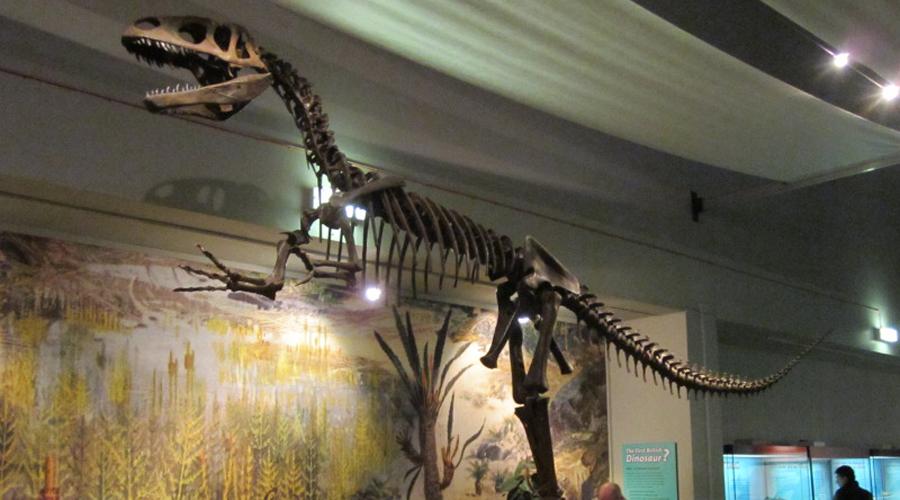 Мегалозавр Динозаврами люди заинтересовались только в 1924 году, когда был найдены останки первого мегалозавра. Его кости спровоцировали настоящий бум археологии: копать землю кинулись даже любители. Изучение мегалозавра позволило биологам понять, как выглядела жизнь на Земле миллионы лет назад.