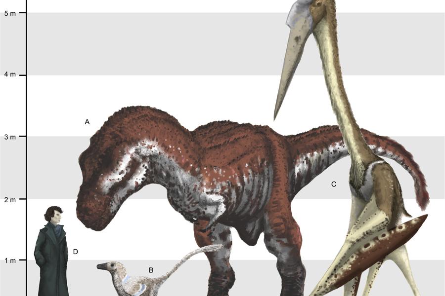Гигантские убийцы Обнаруженные останки принадлежали подвиду аждархид, Hatzegopteryx thambema. Размах их крыльев достигал 10 метров — вы только представьте себе такого гиганта в полете. Эти хищные кровопийцы доминировали на ряде крупных островов, которые существовали на территории современной Румынии.