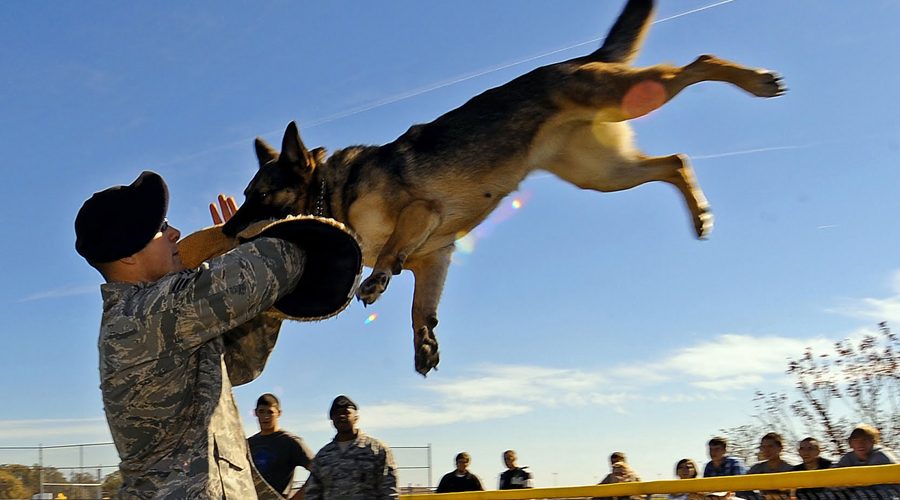 Целим в горло Постарайтесь прижаться спиной к стене. Так собака не сможет опрокинуть вас своим весом, а вы обезопасите тылы. Снимите куртку и держите ее на вытянутых руках перед собой. Зверь ухватит предмет инстинктивно и будет тянуть. Не теряя времени, пинайте животное ногой в горло. Жаль песика, но себя жальче.