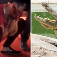 Крокодил отгрыз лицо клоуну прямо во время выступления. Реальное видео