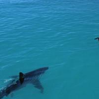 Забудьте о море — после этих фото и к раковине подходить страшно!
