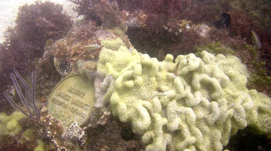 Искусственные рифы Раньше в море хоронили только моряков, сейчас — богатых и немного эксцентричных людей. Компания «Мемориал Нептуна» смешивает пепел после кремации с цементом и создает искусственные рифы, которые затем погружаются в пяти километрах от побережья Флориды.