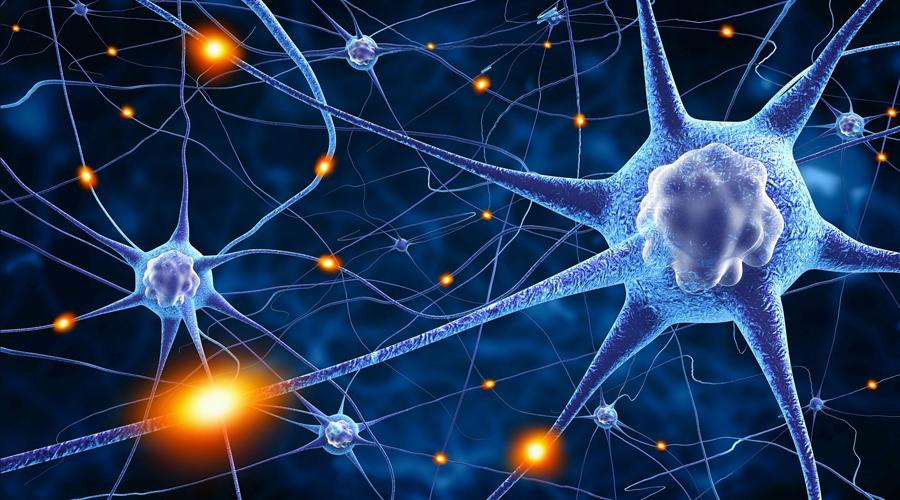 Здесь помню, а здесь не помню Микроглиальные клетки контролируют синаптические связи и обрезают «лишние» концы. Честно говоря, генетики еще и сами не до конца понимают, как микроглиальная клетка распознает, какая именно синаптическая связь уже лишняя. Имеются предположения, что ненужные элементы отмечаются специальным белком.