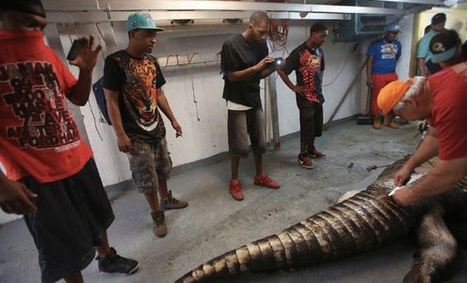 Крокодил-монстр напал на охотников и был застрелен. Но главная опасность поджидала людей в его брюхе!