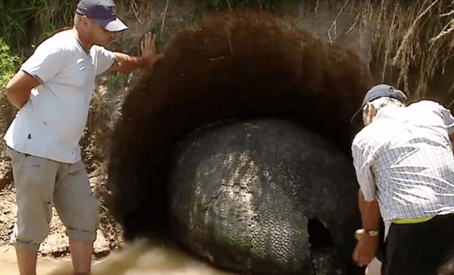 Фермер думал, что нашел яйцо динозавра, но находка оказалась древним существом (5 фото)