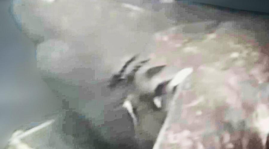 Мегалодон из Марианской впадины Японские ученые исследовали морскую жизнь на дне глубоководного залива Суруга и в какой-то момент решили приманить сюда хищников. Чего они точно не ожидали, так это появления акулы, длина которой была не менее 30 метров. Сегодня считается, что это один из немногих доживших до наших дней мегалодонов.