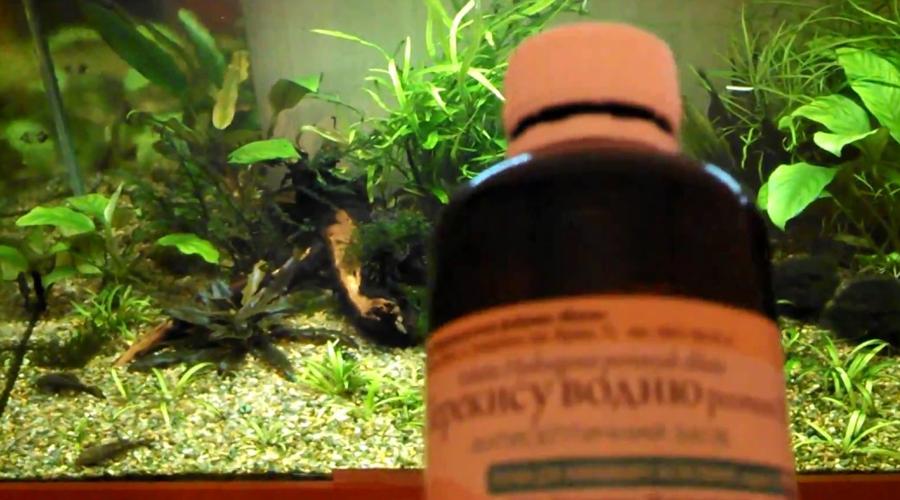 Чистый аквариум Чистить большой аквариум всегда непросто, да и рыб тревожить сачком не очень полезно. Добавьте прямо в аквариум каплю перекиси водорода, чтобы предотвратить возникновение слизи. Не бойтесь, рыбам перекись нисколько не опасна.