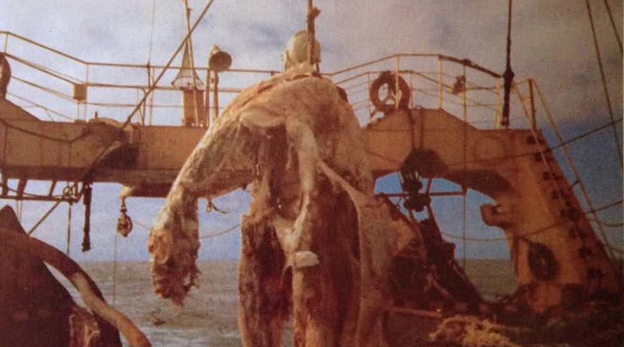 Находка Дзуйе-Мару Тушу загадочного морского зверя обнаружил в воде японский траулер «Дзуйе-Мару». Десять метров в длину, красные плавники и длинный хвост — пойди узнай, что это была за тварь. Капитан отдал приказ выкинуть останки за борт, так как впереди еще предстоял длинный рыболовный сезон. По счастью, рыбаки успели сделать хотя бы несколько фотографий.