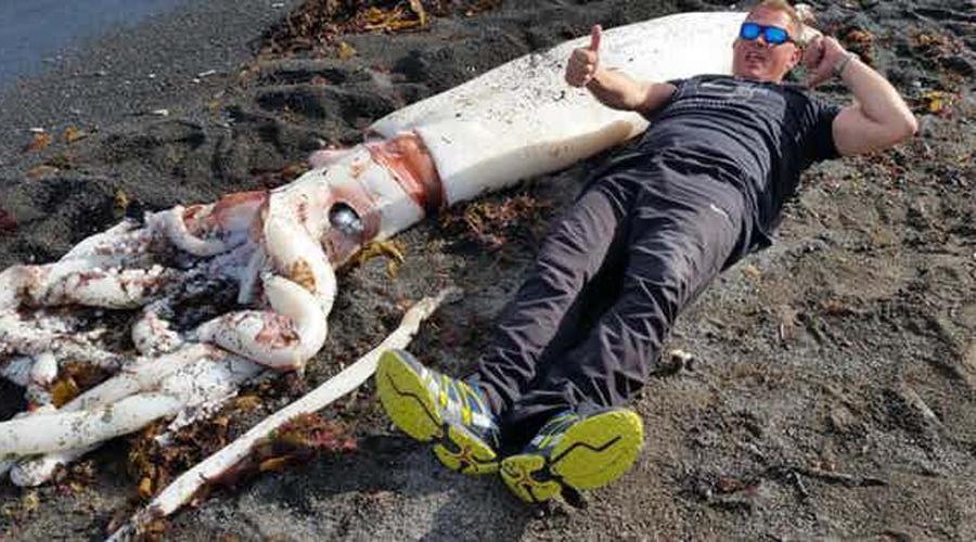 Ктулху Первое видео с гигантским кальмаром появилось только в 2013 году. Эти беспозвоночные до сих пор заставляют волноваться морских биологов, поскольку мало кто имел шанс исследовать хотя бы его потрепанные останки. А в мае 2015 семиметровую тушу кальмара выбросило на побережье Новой Зеландии — местные жители тут же окрестили его «Ктулху».