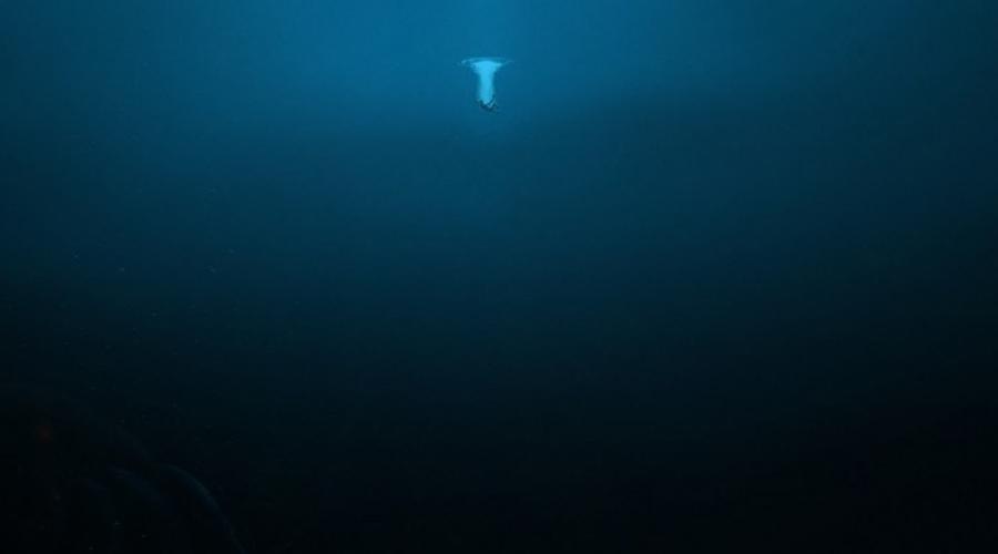 Больше всего в океане пугает собственно сам океан. Только представьте себя падающим в голубую бездну.