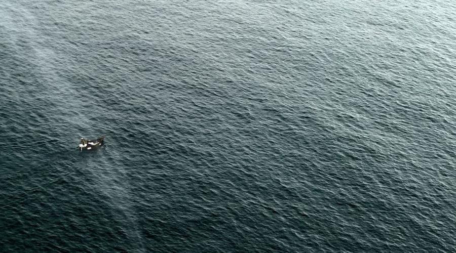 Белый кит? Кстати, у мэлвилловского Моби Дика был самый настоящий прообраз — писателя вдохновили рассказы о ките-великане, нападающем на промысловые суда.