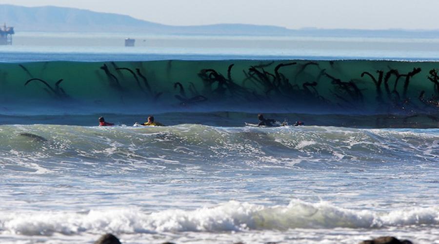 По счастью, волна скрывает от серферов лишь водоросли. Предупреждает, наверное.