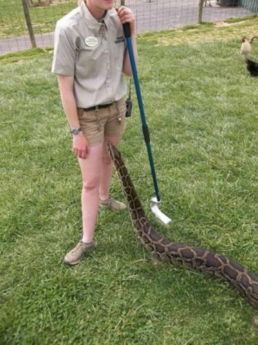 Эй детка, хочешь познакомлю тебя со своим змеем