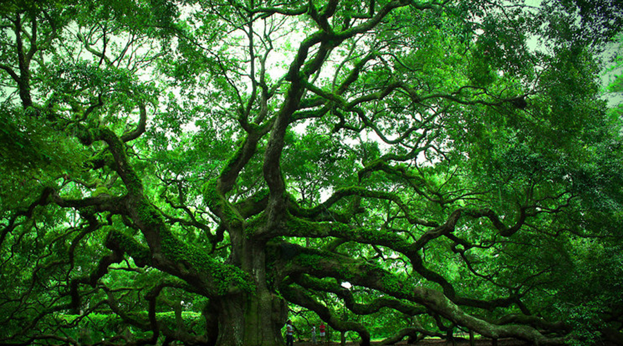 Дерево с ДНК Специалисты компании Biopresence предлагают стать бессмертным (в метафизическом плане) любому желающему. В рамках услуги «Живой мемориал», ДНК усопшего внедряется в ДНК дерева. Главное, фрукты потом с такого дерева не есть, а то уже каннибализмом попахивает.