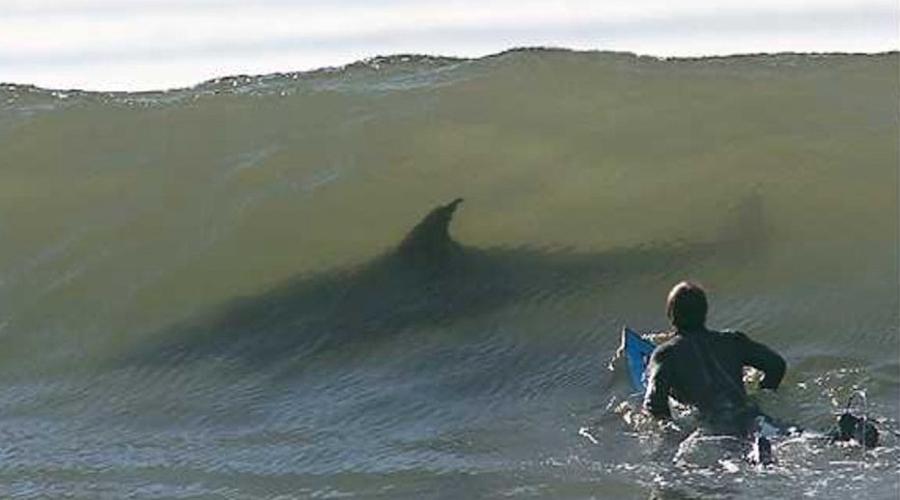 А это уж прибрежные воды Кейптауна. Приятная встреча в волнах, что тут скажешь.