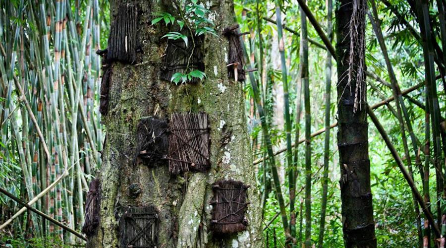 Похороните меня на дереве Австралийские аборигены также чтят деревья и даже хоронят на них своих безвременно погибших детей. В Тибете существует та же традиция: тут маленькие гробики привязывают на деревья в специальных погребальных лесах, которые должны помочь духу мертвого возродиться в новой жизни.