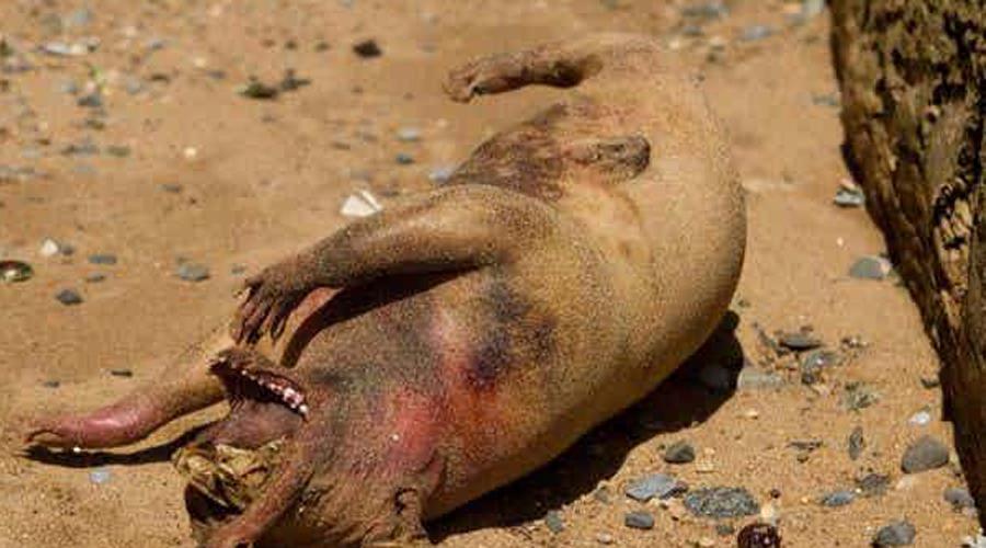 10 таинственных и пугающих существ, выброшенных океаном