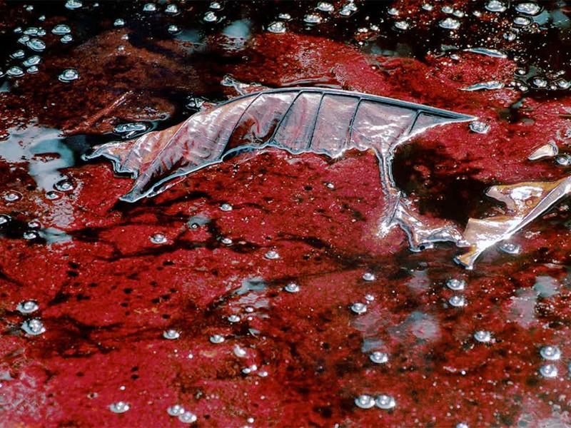 Нигер Нигерия Большая часть всей нигерийской нефти добывается в дельте реки Нигер. Каждый год при полном одобрении правительства страны в реку сбрасывают более 250 тысяч баррелей нефти, что уже не раз приводило к настоящим экологическим катастрофам.