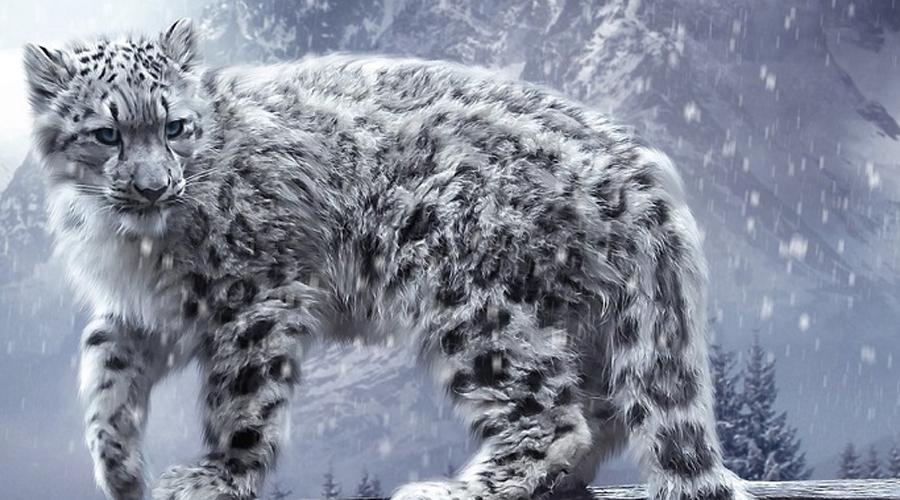 Снежный барс Ирбис или снежный барс встречается только в горах Центральной Азии. Ученые так и не смогли досконально изучить зверя — к местам его обитания подобраться непросто. На сегодняшний день в мире осталось всего 4 тысячи ирбисов, охота на них строго запрещена.
