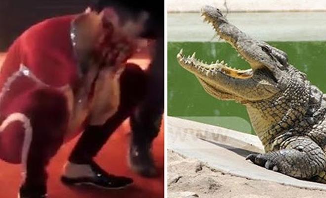 Крокодил отгрыз лицо клоуну прямо во время выступления