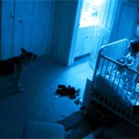 7 доказательств того, что наши питомцы видят реальных призраков