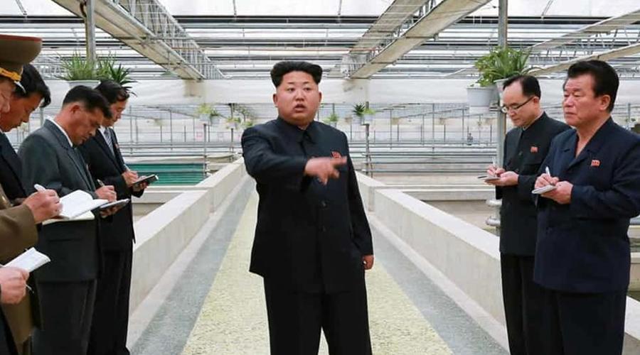 Неумение разводить омаров По счастью, только в промышленном масштабе. В начале 2015 года Ким Чен Ыну вздумалось прокатиться на черепашью ферму — зачем вообще людям нужна ферма с черепахами? Во время инспекции северокорейский лидер поинтересовался у биологов, не хотят ли они заодно с черепахами развести на ферме омаров. Ошеломленных сотрудников предприятия обвинили в некомпетенции, заведующего казнили.