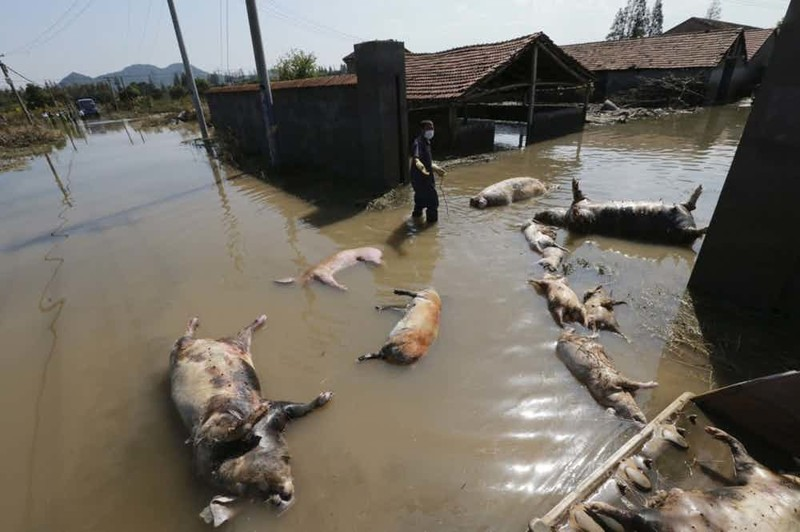 Хуанпу Китай В 2013 году китайские фермеры из окрестностей Шанхая сбросили в Хуанпу 16 тысяч свиных трупов, что привело к небывалому скандалу. Река остается основным источником питьевой воды для Шанхая, но заводы и фабрики Поднебесной все равно сливают в нее токсичные химикаты.