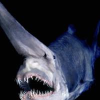 Мрачная тайна Марианской впадины: что на самом деле скрывает океан