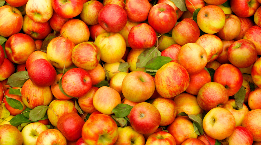 ЯблокиНизкая калорийность яблок делает их чуть ли не лучшим «перекусом» между основными приемами пищи. Недавние исследования Калифорнийского университета подтвердили, что помимо всего прочего всего два яблока в день способны существенно повысить скорость обмена веществ.
