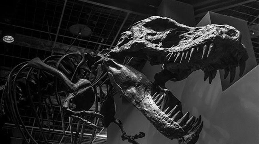 Перо археоптерикса Помните «Парк Юрского периода», где ДНК динозавров находили в застывшем янтаре? Так вот все это вполне может осуществиться в реальности. Палеонтологи из Китайского университета геонаук обнаружили хорошо сохранившееся перо динозавра на янтарном рынке в Бирме. Ему полтора миллионов лет и да, дискуссия о возможности создания реплики из существующего ДНК уже идет.