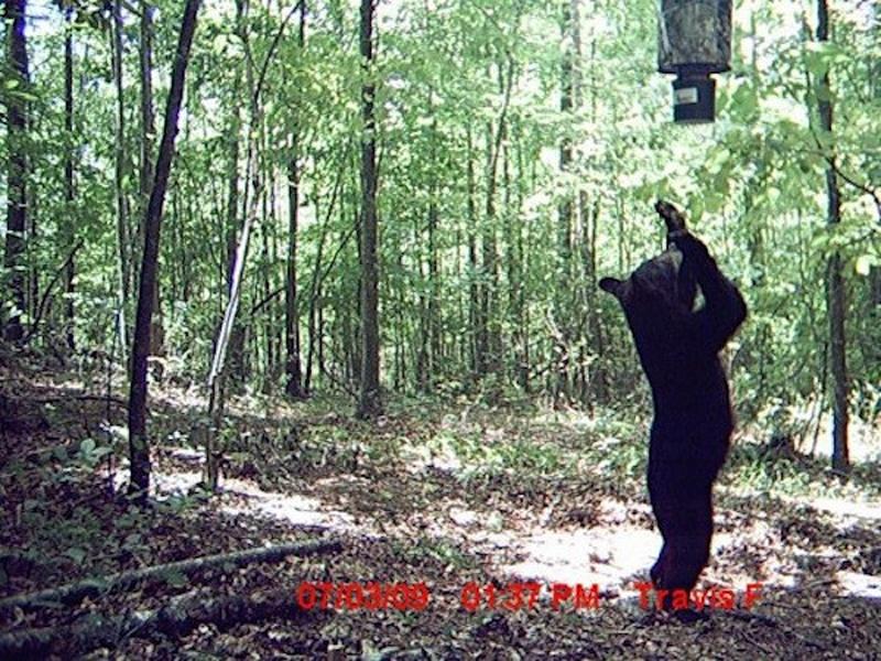Да этот медведь богохульник, идола себе придумал. На костер его!