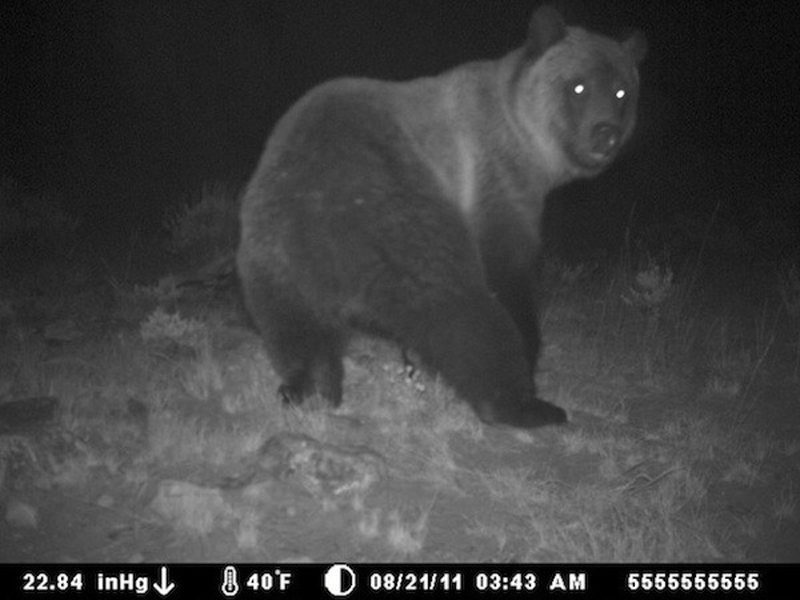 Кажется, медведь что-то заметил
