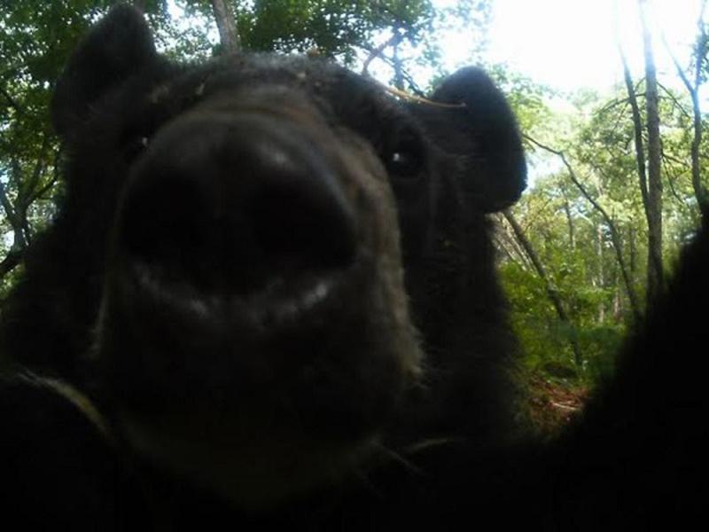 Привет, я медведь и это моя последняя запись