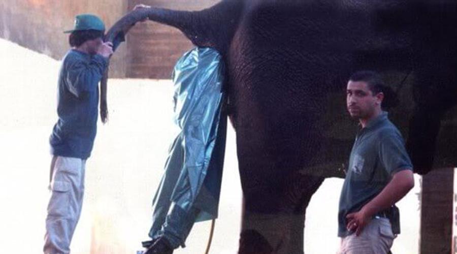 Ветеринар зоопарка Со стороны может показаться, что работа ветеринара в зоопарке просто круглосуточный праздник — гуляй с жирафами, корми с рук львов, чего еще надо! Посмотрите, чем эти люди вынуждены заниматься в действительности.