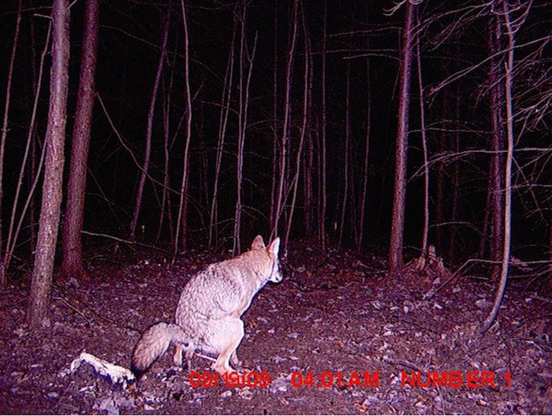Интересно, этот охотник специально поставил камеру в туалете?