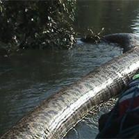 Самая большая анаконда в мире: жуткая находка рыбаков