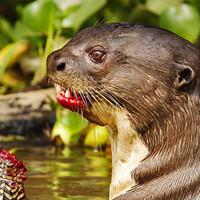 10 самых пугающих тварей из Амазонки