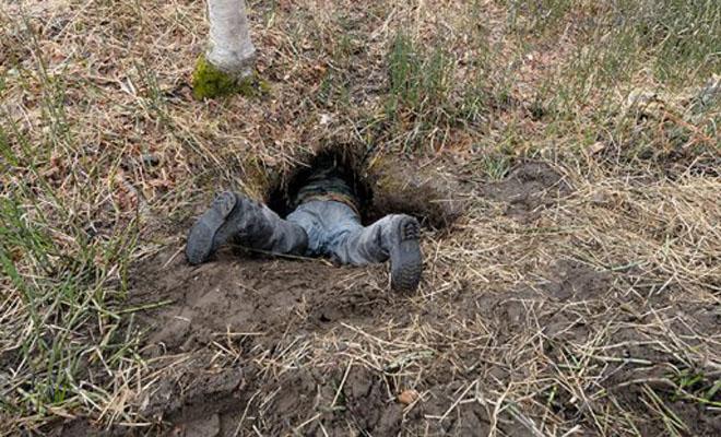 Привет, медведь: как выглядит реальная берлога лесного хозяина (3 фото + видео)