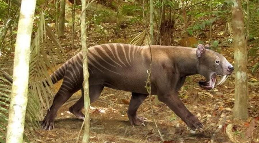 Тилакосмил Сумчатый саблезубый тигр, с длинным телом и мощными лапами. Тилакосмил был прекрасным, очень быстрым и сильным охотником. Криптозоологи полагают, что эти полуводные хищники до сих пор сохранились где-то в Южной Америке: местные жители время от времени заявляют о встречах со странными, не похожими на представителей кошачьих зверями.