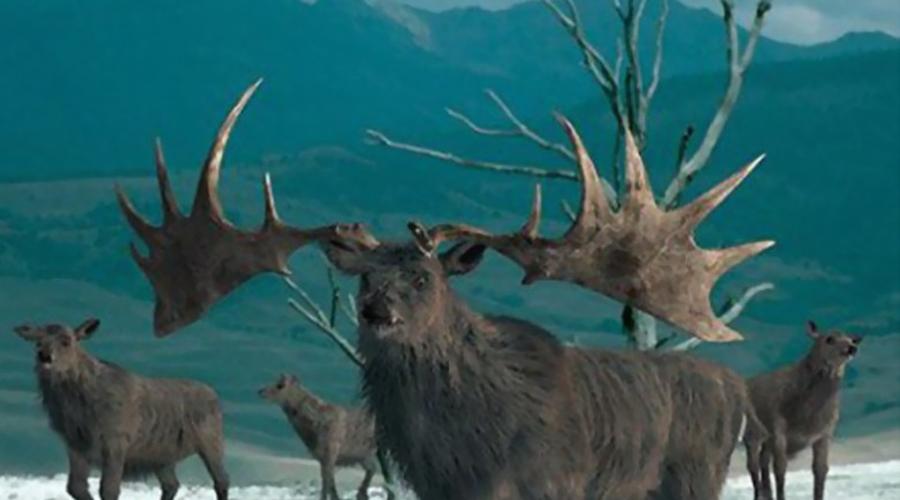 Ирландский лось Вообще-то не лось, а самый настоящий олень — просто первое название уже прижилось. Вымершее во время Ледникового периода животное могут воскресить в ближайшее время, благо образцов ДНК сохранилось предостаточно.