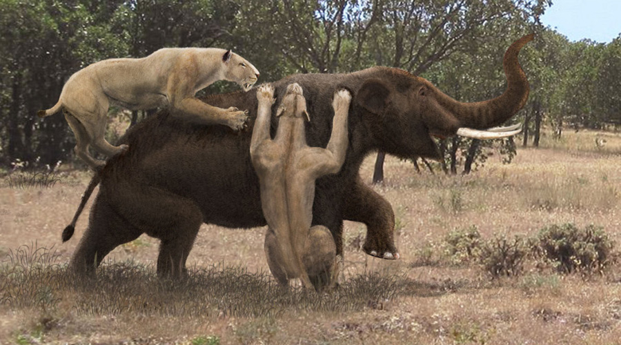 Мегистотерий Название Megistotherium osteothlastes произошло от древнегреческого μέγιστος θηρίον, что можно перевести как «величайший зверь». Это один из самых крупных хищников-млекопитающих, когда-либо существовавших на Земле. В холке мегистотерий достигал двух метров, вырастая до четырех метров длиной.
